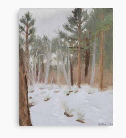 Galena Creek Forest (Plein-air Study) Canvas Print