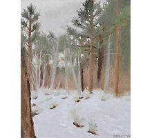 Galena Creek Forest (Plein-air Study) Photographic Print