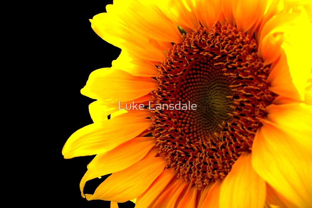 Solar by Luke Lansdale