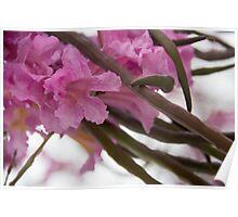 Spring in Arcadia Poster
