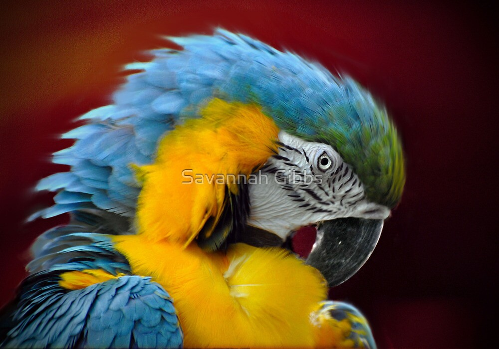 Parrot by Savannah Gibbs