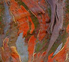 Bark Painting. by Bette Devine