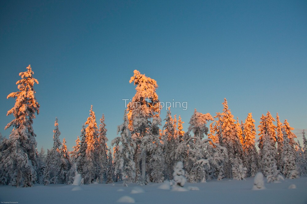 Lapland sunset by Tim Topping