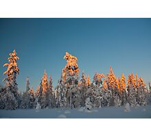 Lapland sunset Photographic Print