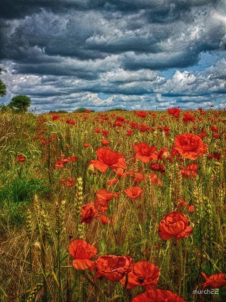 poppy feild by murch22