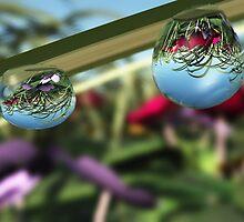 Roses on Raindrops by Hannah Joy Patterson
