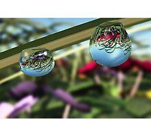 Roses on Raindrops Photographic Print