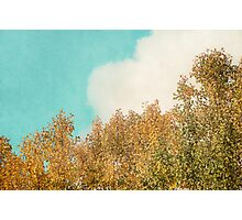 Cloud and Birches Photographic Print