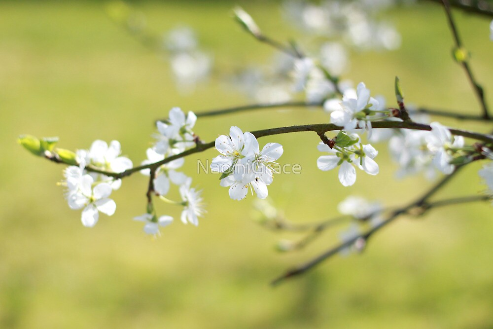Blossom by NaomiGrace