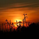 Sunset at Algarve by Soniris