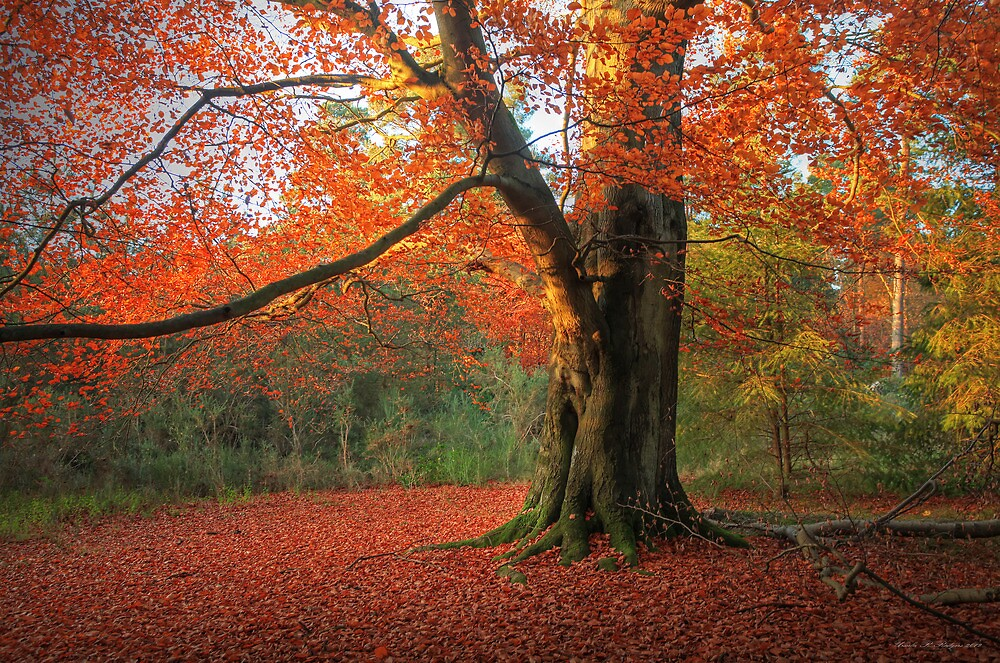 Beauty in Russet by Ursula Rodgers