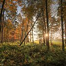 Autumn in the Forest by Ursula Rodgers