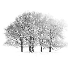 Tree Scape by CJTill