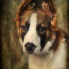 Beautiful Bryn by hampshirelady