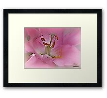 Stay As Sweet As You Are Framed Print