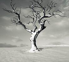 January 2013 by Brian Kerr