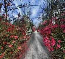 Cypress Gardens - Spring by photosan