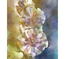 """Red & Green Aeonium"" by Bruce Jones"