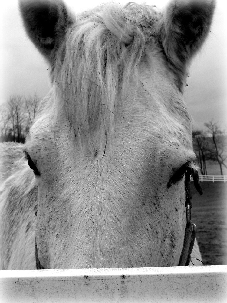 Portrait of a Shy Horse by nastruck