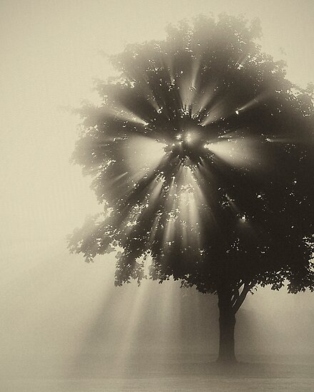 Amazing Sunrise! by Victoria Jostes