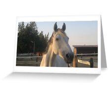 White Horse illustration oil paint digital Greeting Card