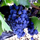 Goose Cross Grapes by ceemoon