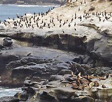 Sea Lions & Cormorants by seeingred13