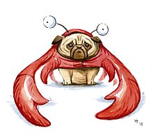 Lobster Pug Photographic Print