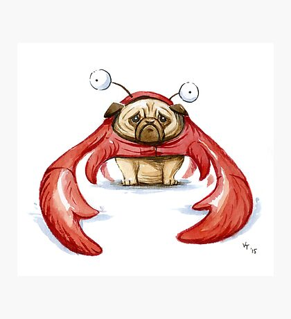 Lobster Pug Photographic Print