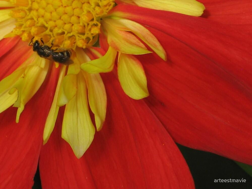 Busy Bee by arteestmavie