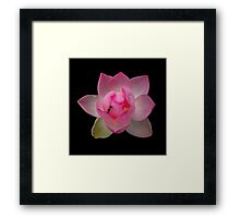 Lotus with Bee Framed Print
