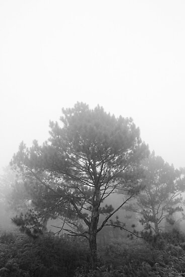 Amidst the Fog by anthrolope