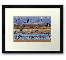 Lots of Cranes Framed Print