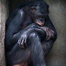 Bonobo Blues by Dennis Stewart