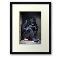 Bonobo Blues Framed Print
