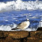 Seagulls and Sea Shores by Caleb Ward