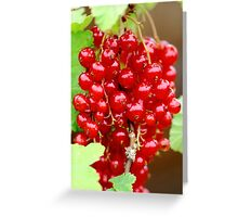 Redcurrant Fruit Greeting Card