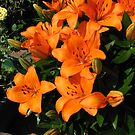 Sunlit Orange Lilies by BlueMoonRose
