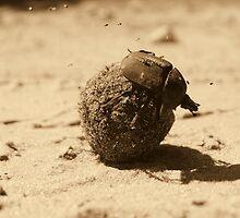 Dung Bettle by Donald  Mavor