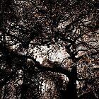 Darkest Light by Jill Holliday