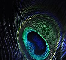 Peacock feather by Minichka