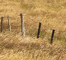 Fenceline artistry by coffeebean