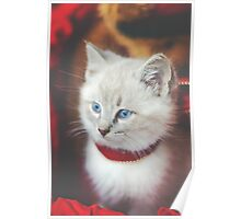 The Cutest Christmas Kitty Poster