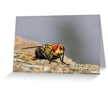 Red eye fly 01 Greeting Card