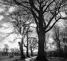 Tree Study No. l by John Burtoft