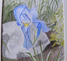 blue iris by paulamarie64