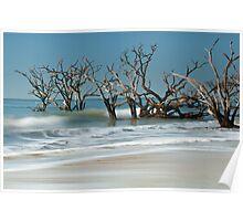 Botany Bay -  Edisto Island  Poster