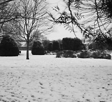 Snowey Landsacpe by Theresa Selley