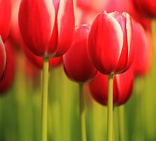 Beauty in Red by Ursula Rodgers