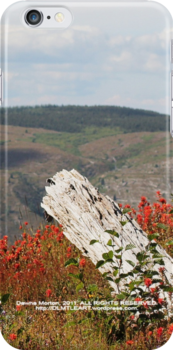 dead tree & paintbrush wildflowers on Johnston's Ridge by Dawna Morton